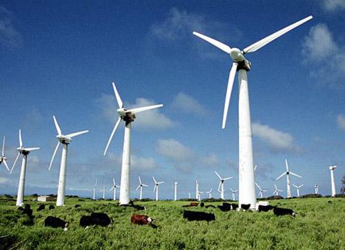 На Львівщині запрацювала потужна вітрова електростанція