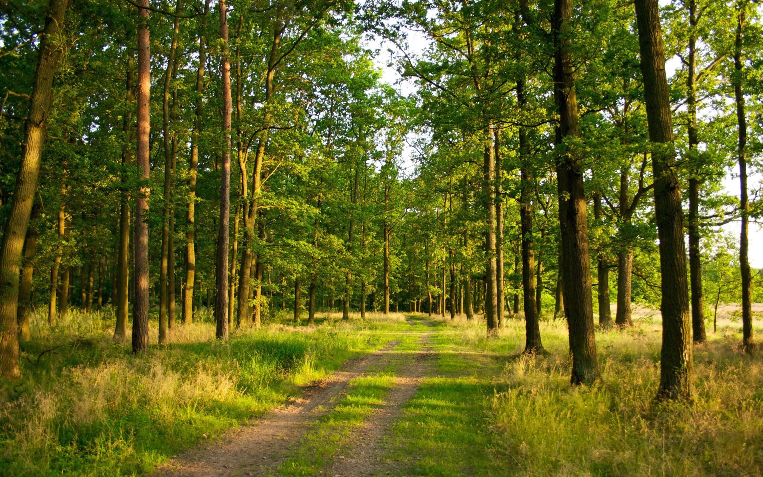 Україна співпрацюватиме з Австрією в питанні збереження лісів
