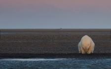 National Geographic-2016.Категорія «Екологічні проблеми» - Ні снігу, ні льоду? (Петті Ваймаер)